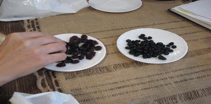 susene-borovnice