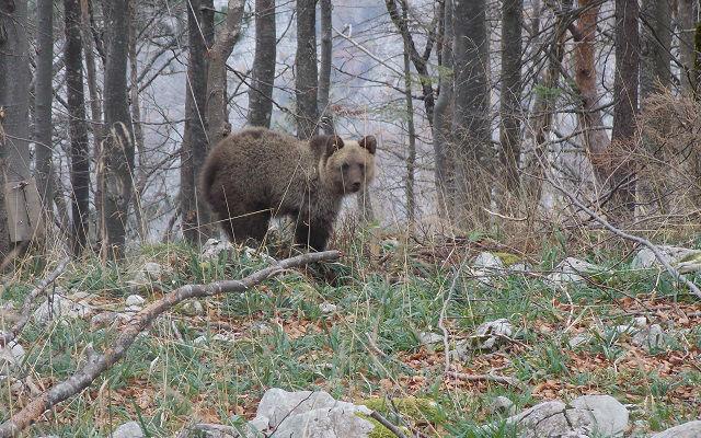 mali-medved-miodrag-petrovic