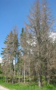 sume-suva-stabla