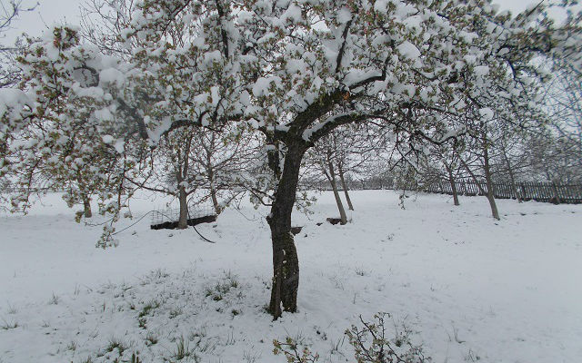 Maline sneg stradale jabuke