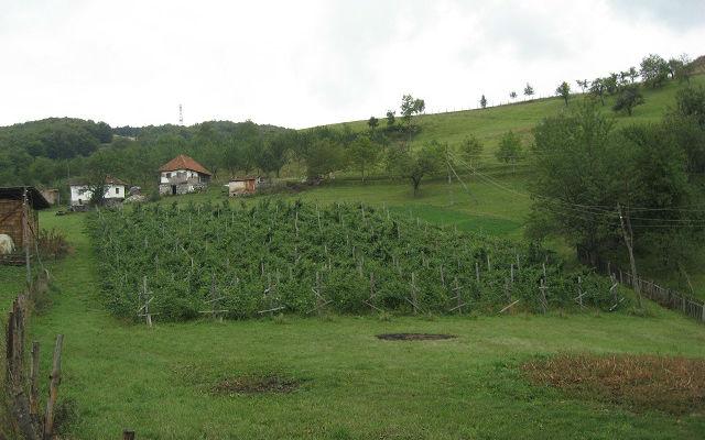 Eko Agrar 6