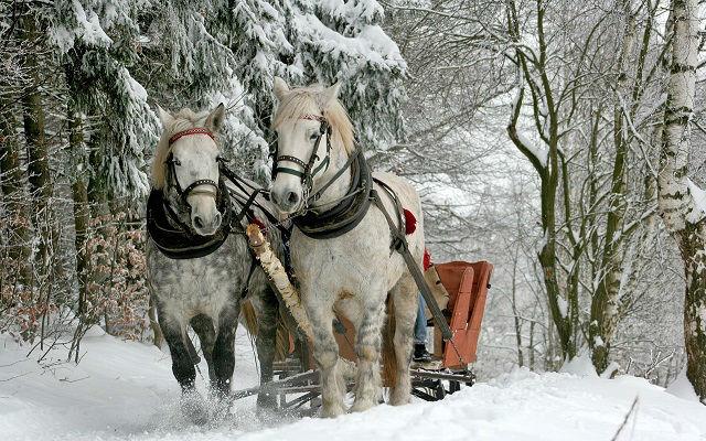 Zima konji i sanke